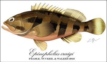 New Grouper Species