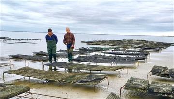 Shellfish Aquaculture