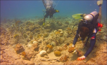 Reef recovery efforts