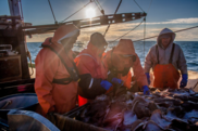 NOAA Fisheries, NEFSC Cooperative Research