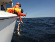 NOAA Fisheries, Cooperative Research