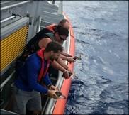 Sea Turtle Release