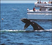 Whale SENSE