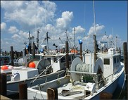 Northeast Groundfish vessels