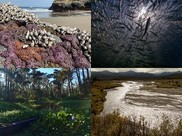 A collage of photos of underwater, river and estuary habitat.