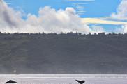 humpback whales