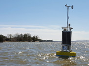 The yellow CBIBS buoy floats off the shoreline at Jamestown, Virginia, in the James River.