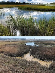 Marsh and channel with green grass.