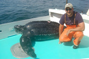 Vincent Saba with a leatherback turtle during a research cruise.