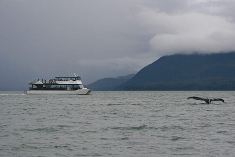 A whale watching vessel keeps its distance from a humpback whale near Juneau, Alaska. Credit: NOAA