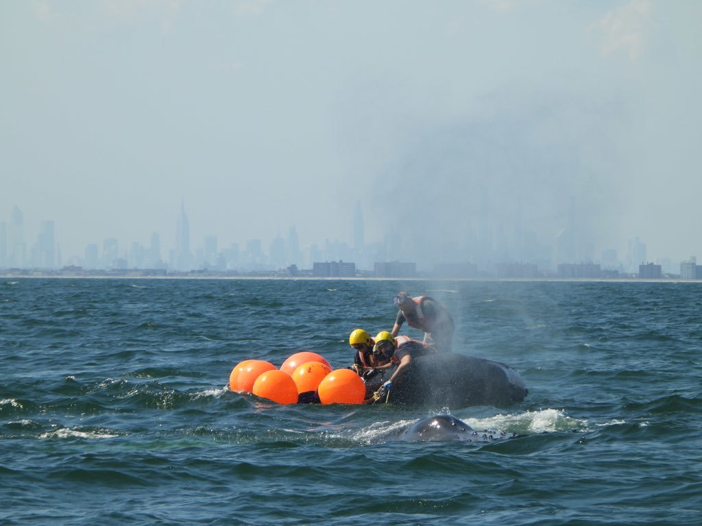 CCS team adds buoys to add buoyancy to the gear, while assessing next steps.