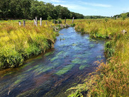 Coonamessett River and Wetland Restoration in Falmouth, Massachusetts