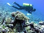 A scuba diver works along a transect line.