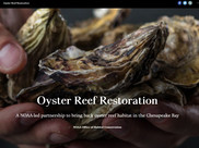Graphic: Hands hold oyster shells in the opening image from the new StoryMap about oyster restoration in the Chesapeake Bay