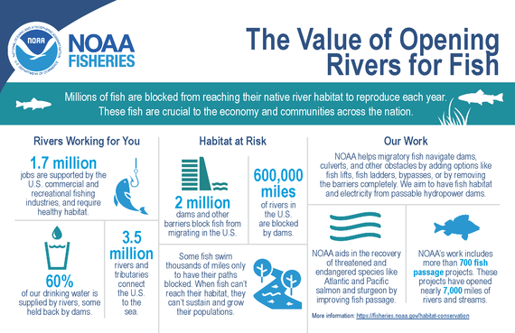 """Infographic: """"Value of Opening Rivers for FIsh"""""""