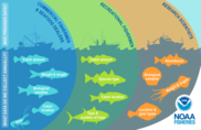 Stock Assessment Process, NOAA Fisheries, NEFSC