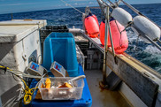 Bottom longline survey gear ready for deployment. Photo NOAA Fisheries.jpg