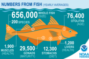 Numbers from a fish, NEFSC, NOAA Fisheries