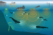 The marine soundscape is made up of all sources that contribute sound to the environment. NOAA Fisheries