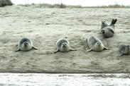 seal share
