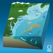 U.S. Northeast Shelf Marine Ecosystem, NOAA Fisheries