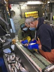 Jon Hare and Christine Kircun of NEFSC at the Spring Bottom Trawl Survey, NOAA Fisheries