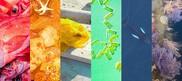 nefsc-2021-pride-month-marine-species-rainbow-feature-image, NOAA FIsheries