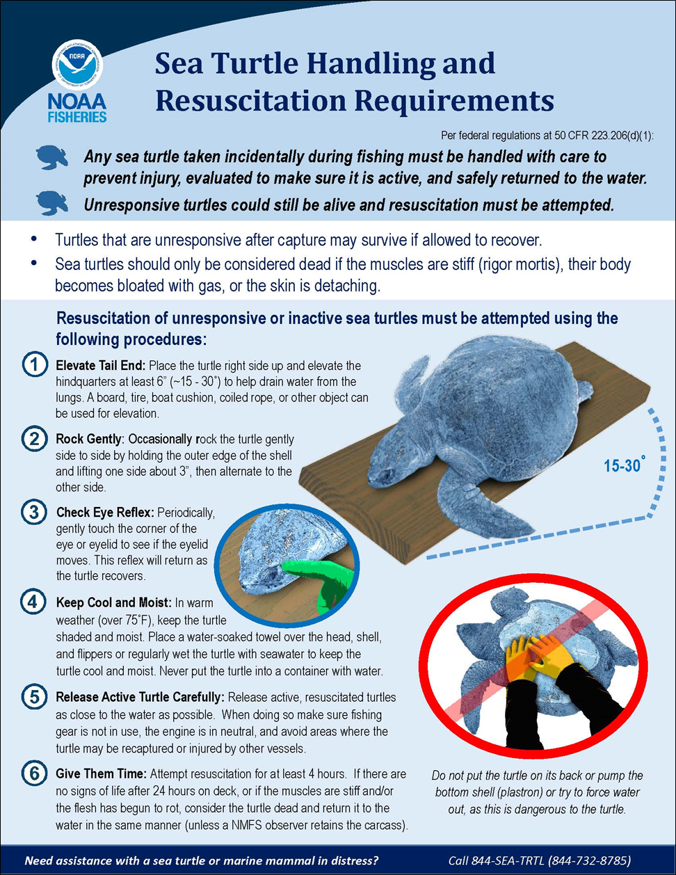 Sea Turtle Handling and Resuscitation Requirements Infographic