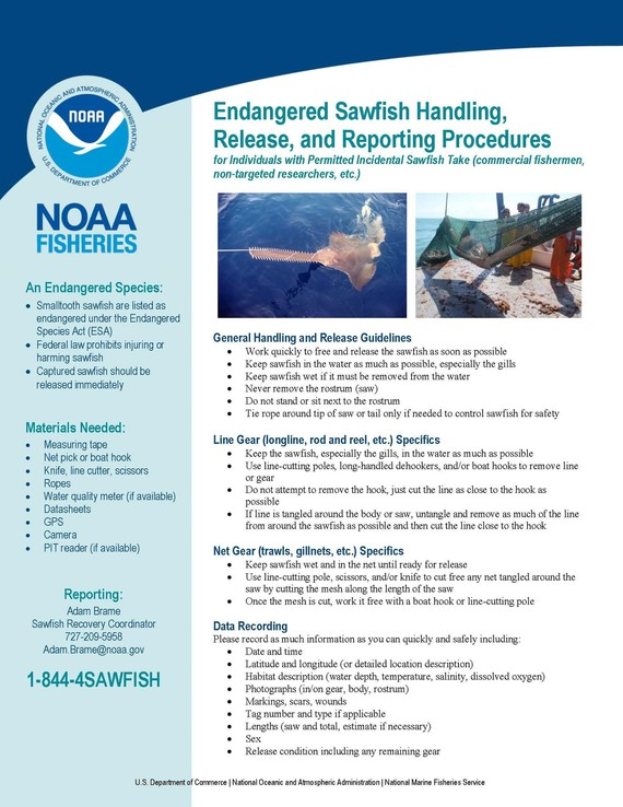 Sawfish Handling, Release, and Reporting Procedures Infographic