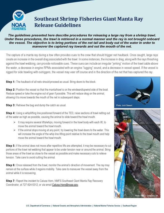 Giant Mantra Ray Release Guidelines Infographic