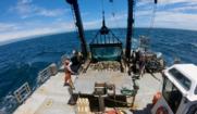NEFSC fisheries surveys