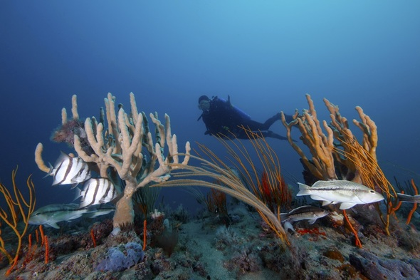 Diver at Gray's Reef