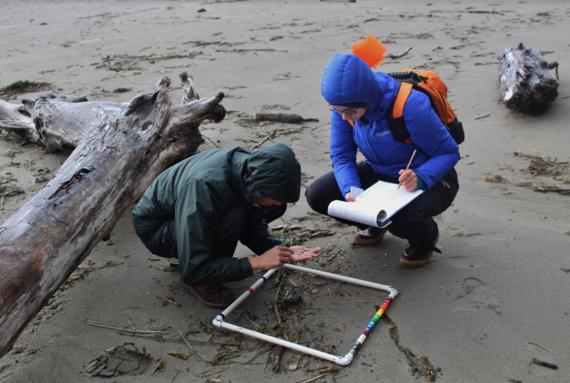 Training participants search for small marine debris.