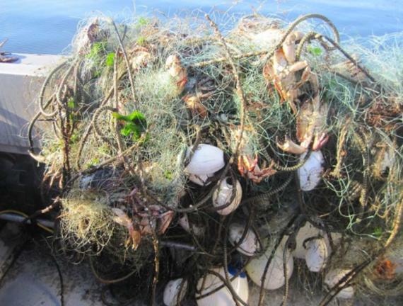 Derelict net removed from ocean.
