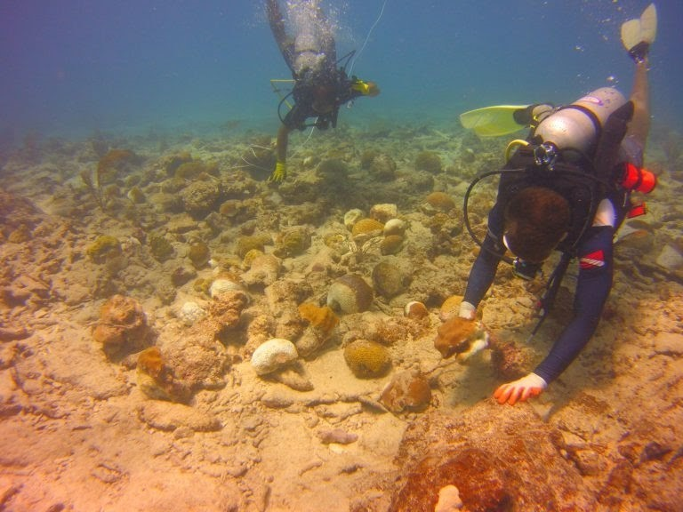 coral recovery pr