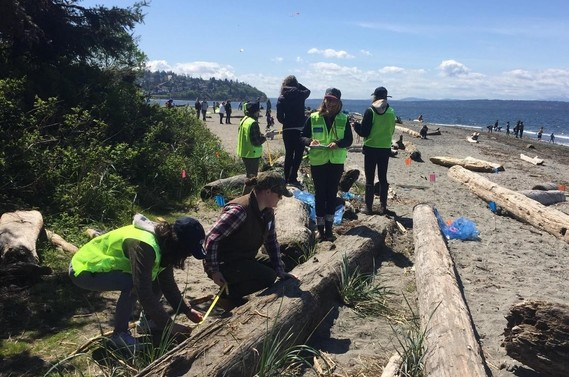 Volunteers search for marine debris items.