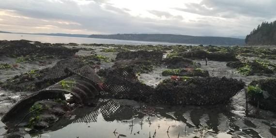 A Shellfish farm at low tide.