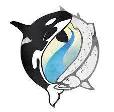 Salmon and Orcas
