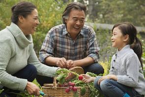 Asian American family gardening