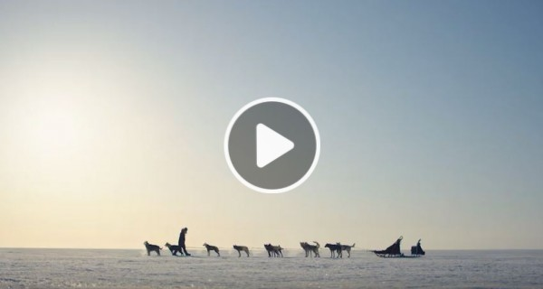 Screenshot of Heart of the Land video. Image of wolves and wintery landscape.