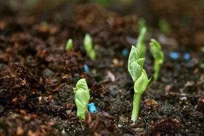 Starting green plant