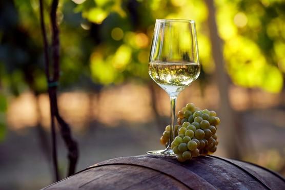 Newsletter wine