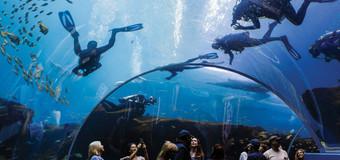 lifewaters dive