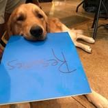 Dog with resume
