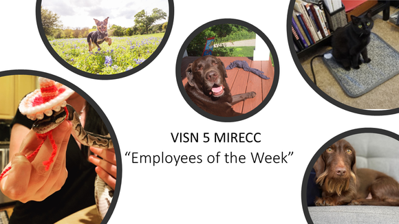 "VISN 5 MIRECC ""Employees of the Week"" dogs, cats, and a snake!"