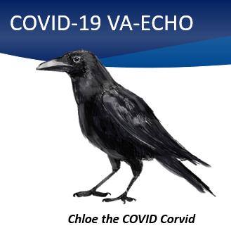 COVID-19 ECHO Chloe the COVID Corvid