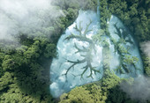 trees with lungs superimposed