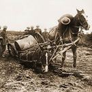 Horse in mud