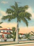 Las Olas palms 1920s