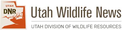 [Image: wildlife-news-head_original.png]